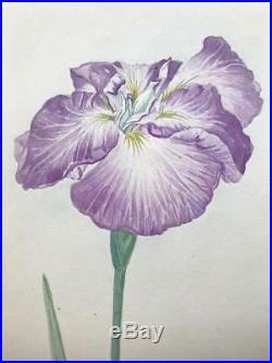 Antique Embossed Japanese Woodblock Print of Iris Flower Signed