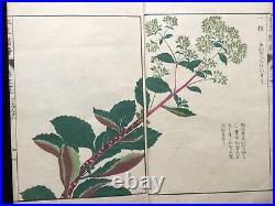 Japan Edo Illustrated book of flora HONZO ZUFU Color Woodblock print book Vol. 33