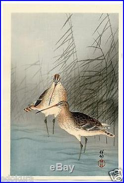 OHARA KOSON (Shoson) JAPANESE Woodblock Print HANGA Snipe and Reeds in Stream